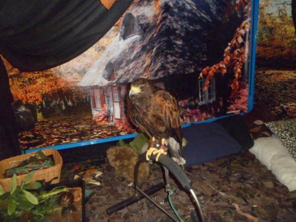 Birds of Prey Photo-1