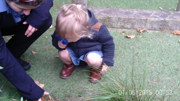 Busy Bees Bug Hunt Photo-5