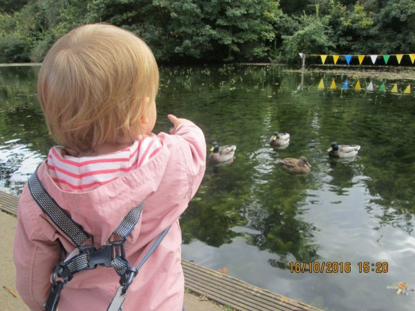 We went to see the ducks  Photo-3