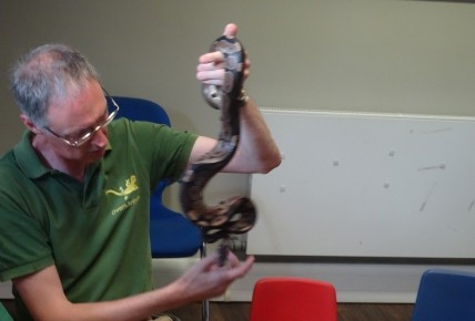 Can you hold a spider snake or a geko? Photo-2