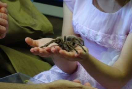 Can you hold a spider snake or a geko? Photo-5