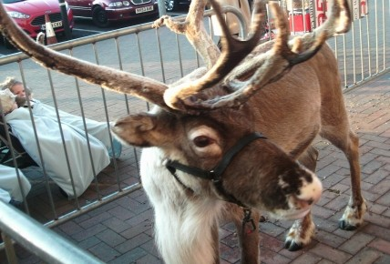 A trip to Tesco to see the Reindeer! Photo-1