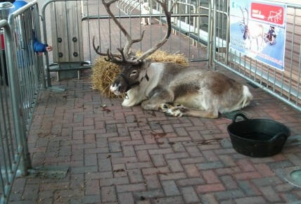 A trip to Tesco to see the Reindeer! Photo-2