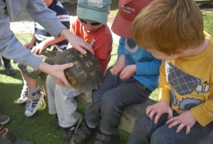 Timmy the Tortoise came to visit. Photo-1
