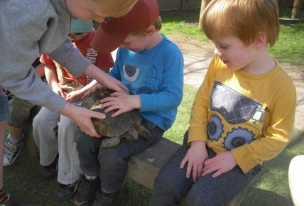 Timmy the Tortoise came to visit. Photo-2