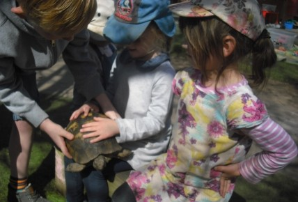 Timmy the Tortoise came to visit. Photo-3