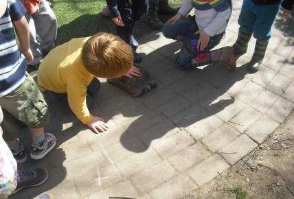 Timmy the Tortoise came to visit. Photo-4