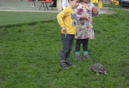 Timmy the Tortoise came to visit. Photo-5