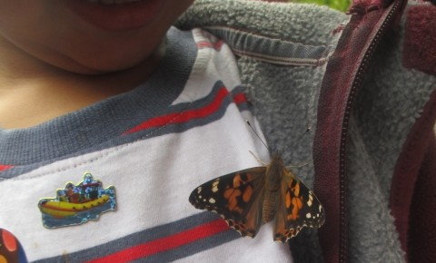 Butterflies in Nursery Photo-3
