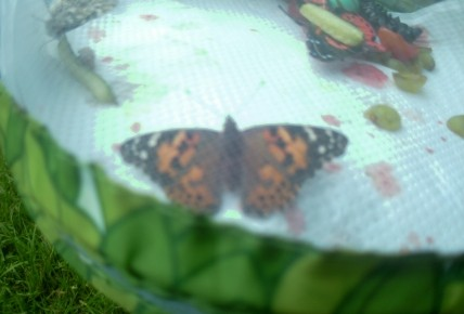 Release the butterflies!! Photo-1