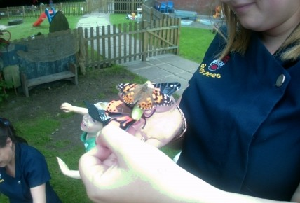 Release the butterflies!! Photo-2