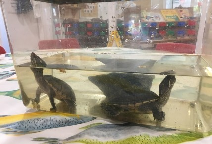 Terrapins at Busy Bees Photo-1