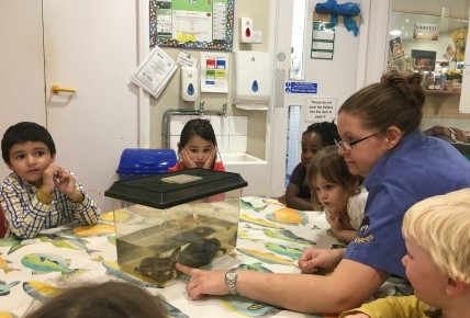 Terrapins at Busy Bees Photo-3
