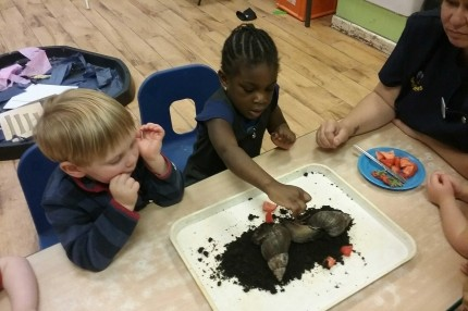 Our Giant African Snails...