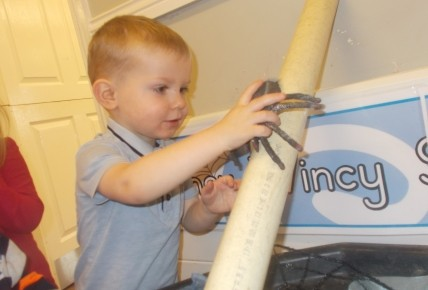 Nursery Rhyme Week - Incy Wincy Spider Photo-3