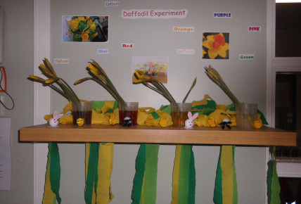 Daffodil Science experiment Photo-5