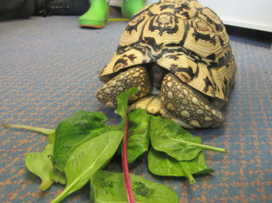 Meet Leo the Tortoise  Photo-1