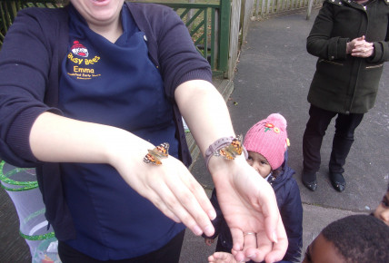 Butterflies Hatch at Nursery Photo-1