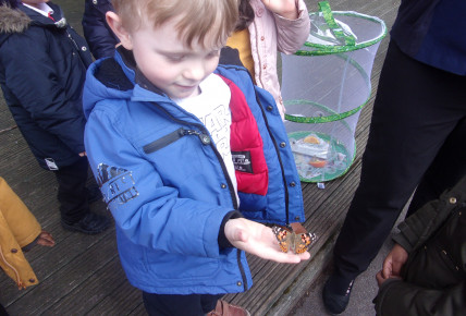 Butterflies Hatch at Nursery Photo-3