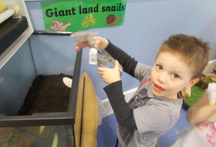 Meet our pet snails! Photo-1