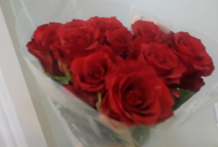 Red Rose Day Photo-5